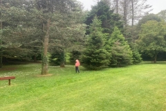Looking at trees to find what type they are